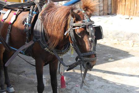 blinders: draft animals horse, the island of Gili Trawangan, Indonesia