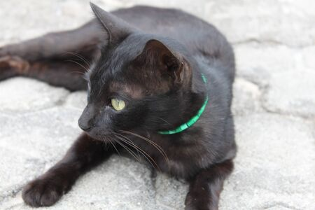 cat island: black cat with green eyes, the island of Gili Trawangan, Indonesia Stock Photo