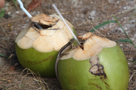 Coconuts ready to drink in a coconut milk