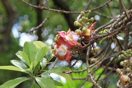 endemic: endemic flowers Seychelles
