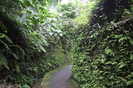 ubud: pedestrian ways, Ubud, Bali, Indonesia, Southeast Asia,