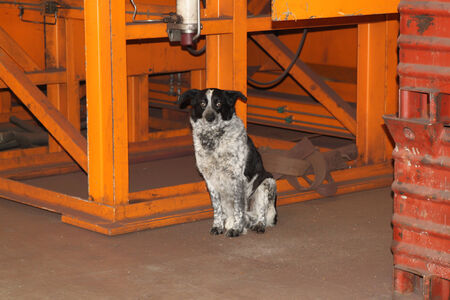 neatly: street dog sits neatly within the industrial site Stock Photo