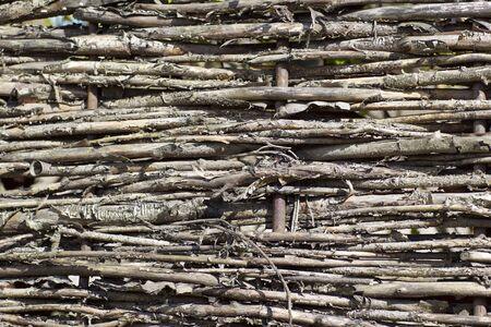 plexus: fragment of fence plexus branches in the village