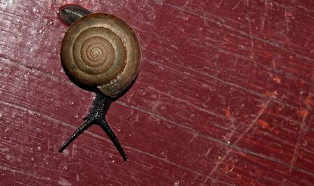 cochlea: Large snail with a long mustache moves on the floor veranda Stock Photo