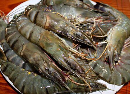 kingsize: Fresh shrimp king size ready for cooking