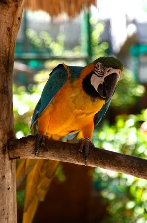 tropics: parrot sits on a tree branch in the tropics