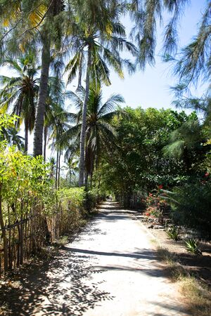 trailway: The road in the rainforest on the island of Gili Meno, Indonesia