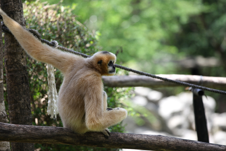 southeast asia: Monkeys are busy with their chores, Thailand, Southeast Asia