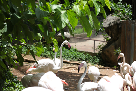 southeast asia: Pink flamingo with a graceful neck, Thailand, Southeast Asia