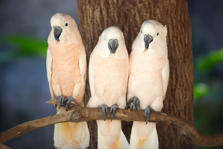 southeast asia: Bright multi-colored parrots sit on a branch, Thailand, Southeast Asia