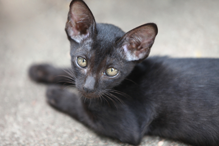 cat poses for the camera, Thailand, South East Asia