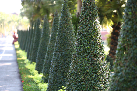 vealy: Examples of landscape design, Thailand, South East Asia Stock Photo