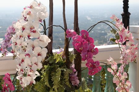 Flowering of colorful orchids, Thailand, South East Asia