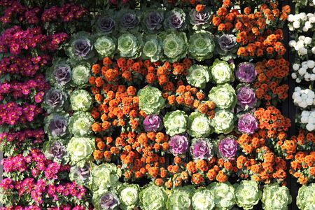 Bright colorful multicolored flowers, Thailand, Southeast Asia Stock Photo