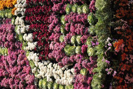 colorific: Bright colorful multicolored flowers, Thailand, Southeast Asia Stock Photo