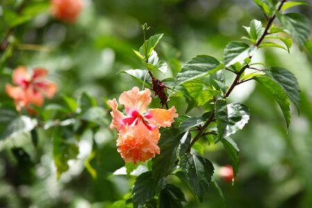 colorific: Bright colorful multicolored flowers, Singapore, Southeast Asia