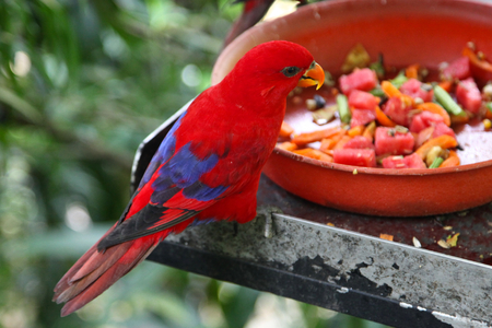 Variety of colorful birds, Singapore, south east Asia