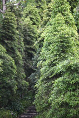 다양 한 식물, 싱가포르, 동남 아시아의 녹색 잎