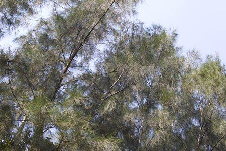 Railay 반도, 크라비, 태국의 열 대 나무