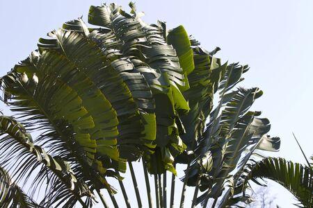 Tropical trees of the Railay Peninsula, Krabi, Thailand