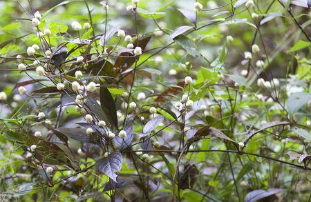 Tropical grass of the Railay Peninsula, Krabi, Thailand
