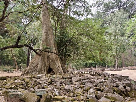 Huge trees with a powerful root system growing in the temple complex of Angkor Wat, Cambodia 版權商用圖片