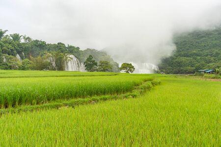 La cascade de Ban Gioc ou Detain coule vers le bas cannelée est une destination de voyage célèbre, la plus populaire des 10 meilleures cascades au monde le long de la frontière de Cao Bang, du Vietnam et de la Chine
