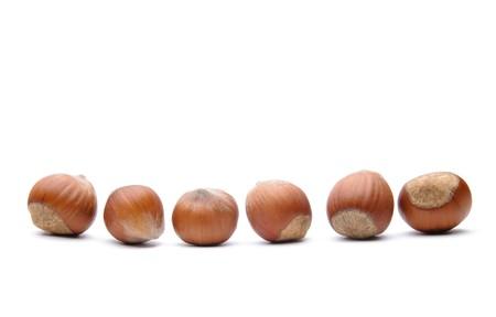 Isolated  hazelnuts photo
