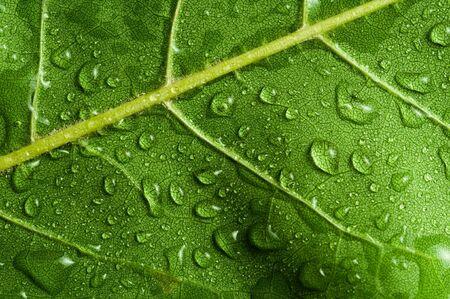 Macro of green tree leaf photo