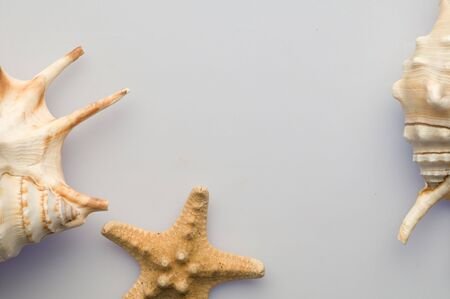 seastar: Some seashells and seastar Stock Photo