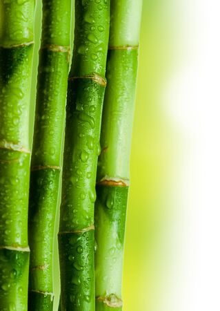 Bamboo isolated color background Stock Photo - 8309558