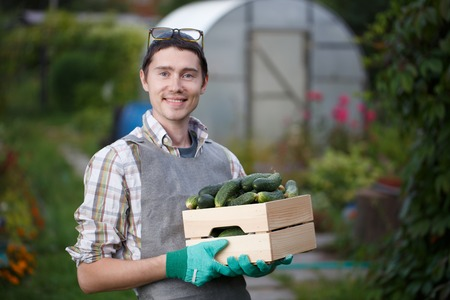 agronomist: Brunet with box of cucumbers Stock Photo