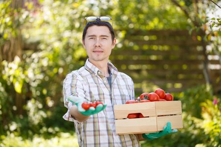 agronomist: Agronomist with box of tomato