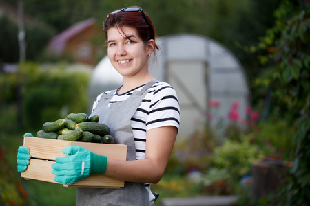 agronomist: Young brunette with cucumber crop Stock Photo