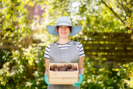 agronomist: Woman with box of potatoes Stock Photo