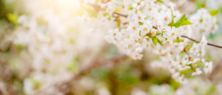 Photo of white lilac on blurred background