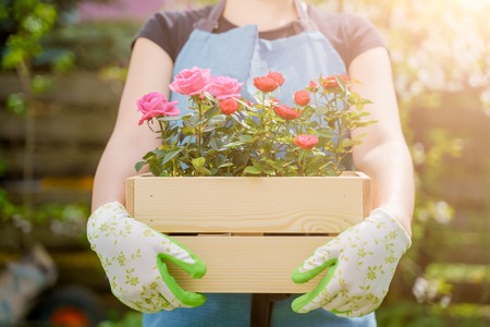 Image of woman in gloves with box with roses standing in garden
