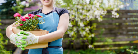 Image of unrecognizable woman in gloves with box with roses standing in garden in afternoon Stock Photo