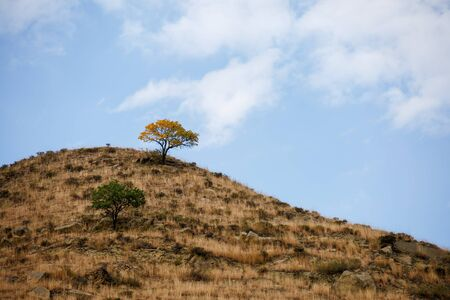 Image of mountain hill with tree, blue sky with clouds