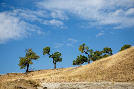 Photo of mountain hill with trees, blue sky with clouds 写真素材