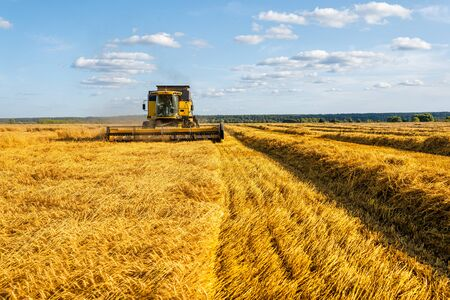 Image from afar of harvester harvesting wheat, blue sky.