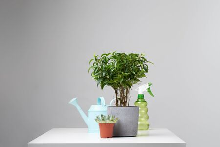 Indoor potted plant, watering can, spray bottle on empty gray background in studio