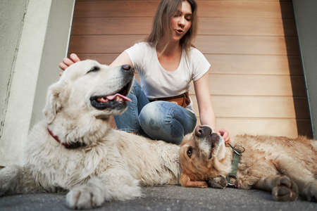 Young girl in blue jeans next to two dogs on street in afternoon.