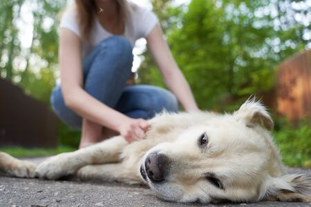 Woman stroking dog lying on ground at summer
