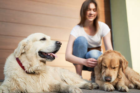 Woman in blue jeans next to two dogs on street in afternoon