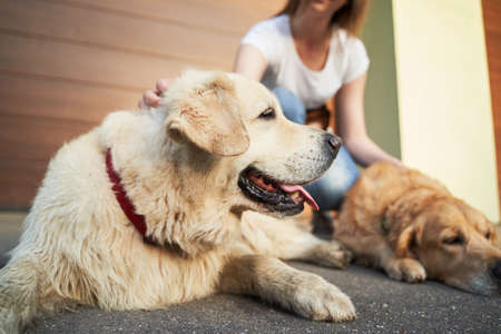 Young woman in blue jeans next to two dogs on street in afternoon
