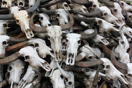terrify: pile of buffalo skull