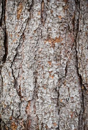 chink: pine tree bark texture Stock Photo