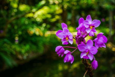 orchidea: violet orchids with green background Stock Photo