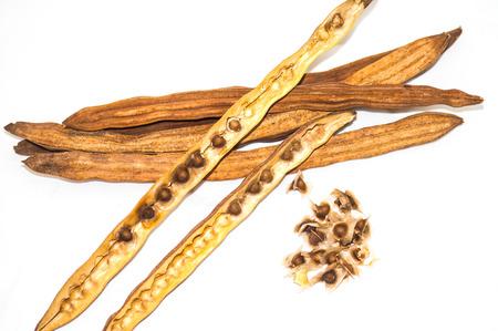 moringa: Moringa seed